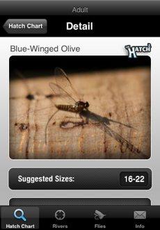 Flies Screen